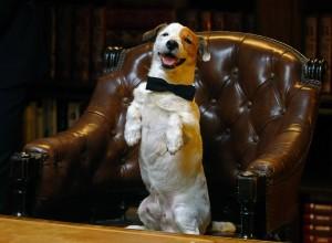 Cook en Pancho, el perro millonario