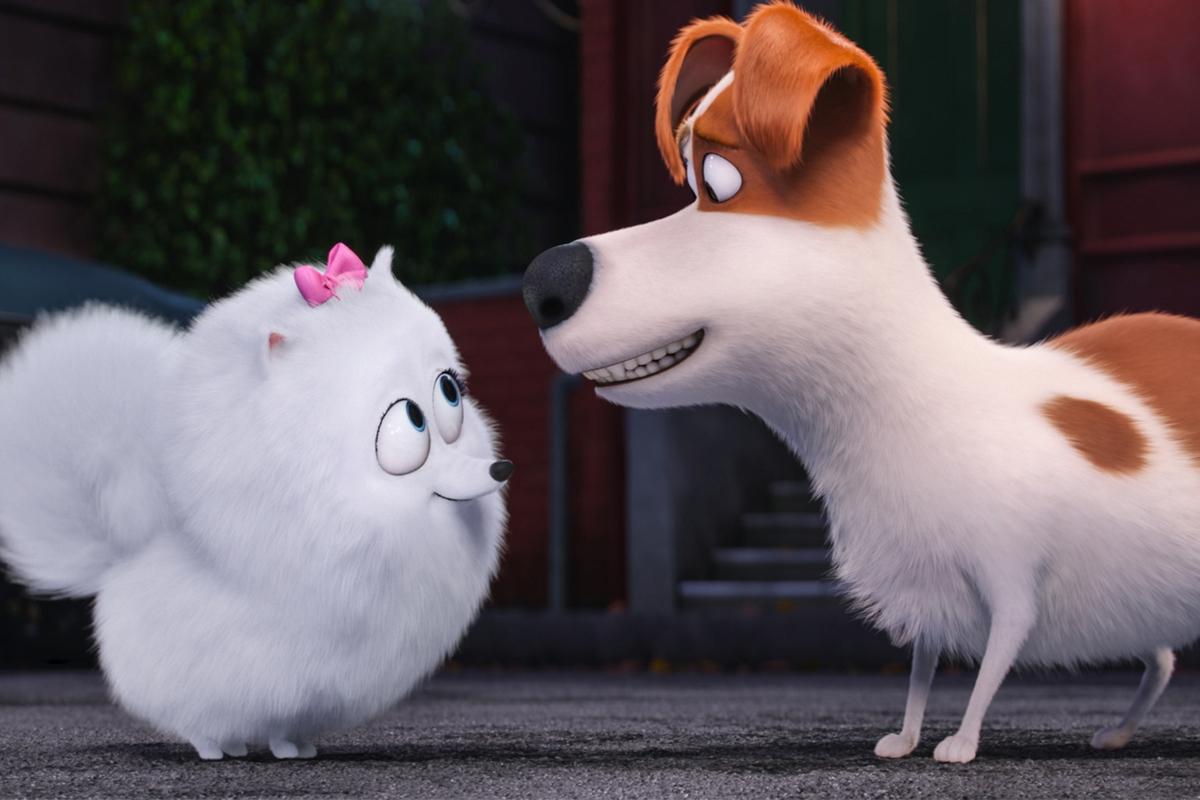 Gidget y Max en Mascotas