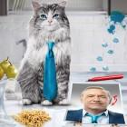 Siete vidas, este gato es un peligro - Poster