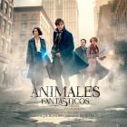 Animales fantásticos y dónde encontrarlos - Poster