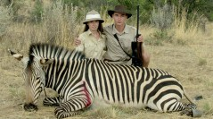 Safari - Poster